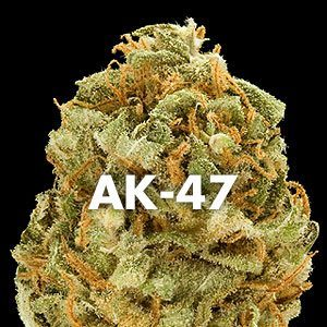 marijuana_strain_ak-47