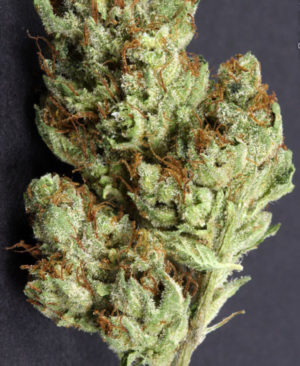 Buy Asteroid OG online | Asteroid OG for sale | Asteroid OG