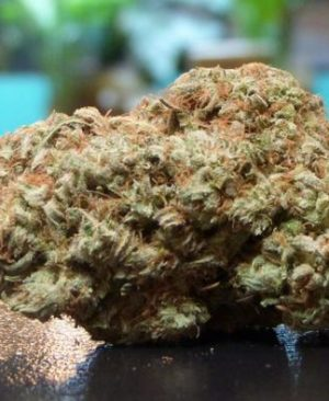 Buy Chocolope Strain online | Chocolope Strain for sale | Chocolope Strain