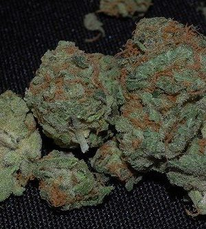 Buy master bubba online | master bubba for sale | master bubba