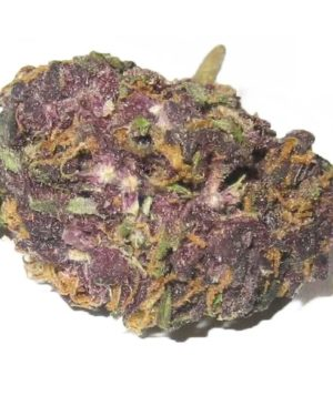 Grandaddy-Purple