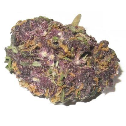 Grandaddy-Purple